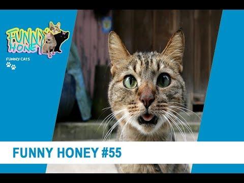 funny-horney