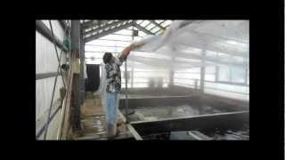 Niigata Japan Koi Fish Farm Tour - Breeder: Hoshikin Koi Farm