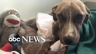 Hurricane Dorian 'Miracle' dog has new home