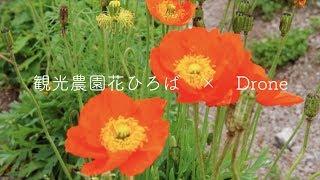 【ドローン】観光農園花ひろば【愛知県知多郡南知多町】
