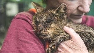 Никто не хотел прикасаться к этому коту, но одна женщина решила иначе