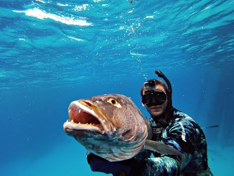 Spearfishing in the Bahamas