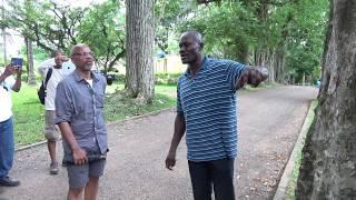 Parasite Ficus Tree at Aburi Botanical Gardens - Ghana May 2018 Tour