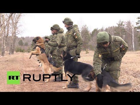 Как в России собак готовят к службе в армии