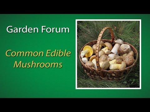 Project Green: Common Edible Mushrooms