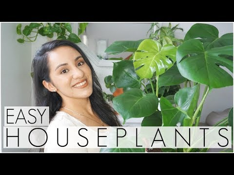 Houseplants for Beginners! Easiest to CARE for indoor PLANTS!