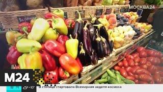 Смотреть видео Сколько продуктов выкидывают россияне ежегодно - Москва 24 онлайн
