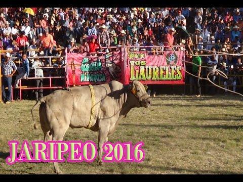 JARIPEO TOROS DIVINOS Y RANCHO EL FARALLON EN IHUATZIO MICHOACAN 2016