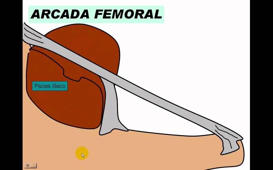 Arteria femoral - YouTube
