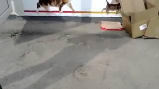 щенок и рисованные кошки