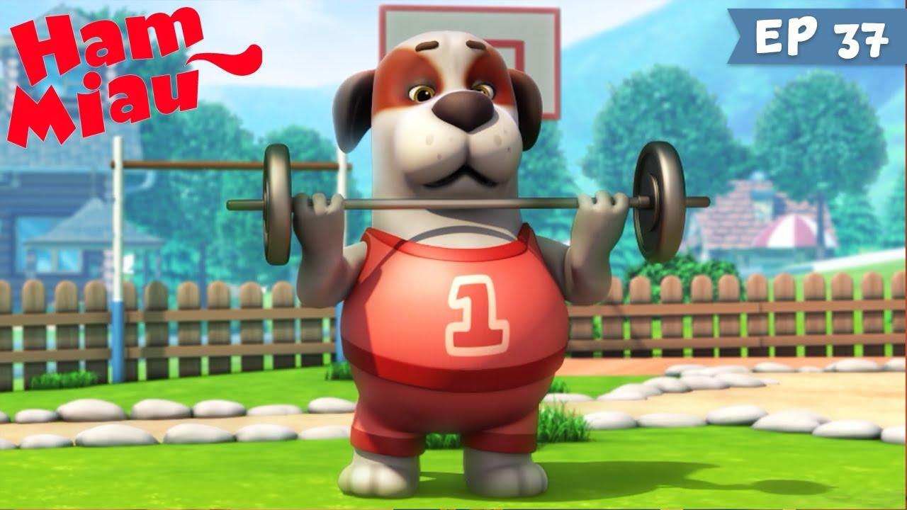 Ham Miau ? Super Sparky ? Desene animate pentru copii | HeyKids