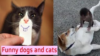 ❤Funny Dog Compilation #10   Dogs and Cats Funny moments   CUTE PET