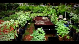 How to make your own easy rooftop garden? | Poovali | News7 Tamil