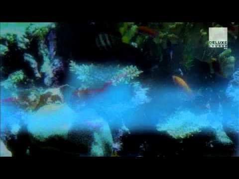 Reve de Cabaret - Trust Me - Official HD Video