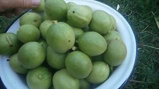 Медовый сироп с зелеными орехами