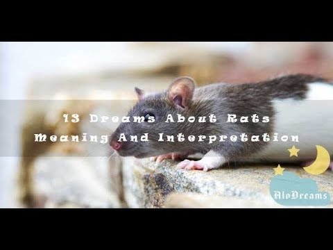 #93 Dreams About Rats  -  Meaning & Interpretation