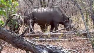 Safari Zimbabwe - part 2 - Rhino Safari Camp