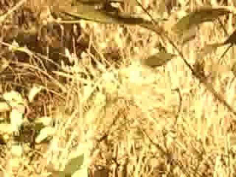 THE VIDEO OF THE FOREST WALK  EARLY IN THE MORNING AT CHITON NATIONAL PARK,NEPAL