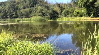 река Сходня 4 08 2015 (Химки)