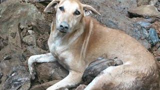 😿 10 захватывающих спасений животных 🐶