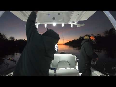 Santee Cooper Lakes Rippn Lips Catching Stripers An Catfish