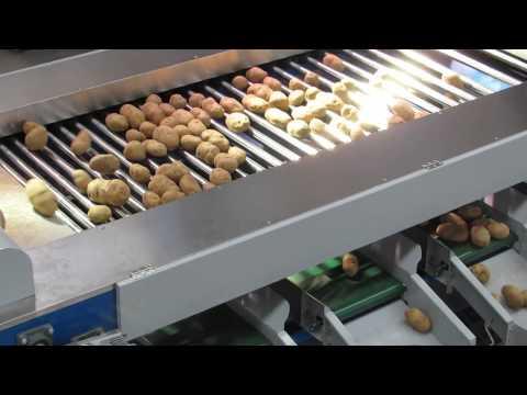 potato sorter machine