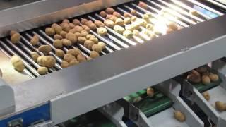 potato grading machine, potato sorter