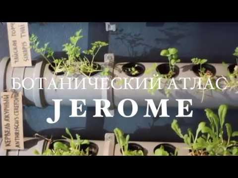 Сорняки - фото растений, описание, названия, энциклопедия