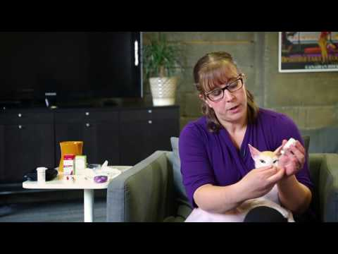 how-to-give-my-cat-an-insulin-injection