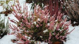 Самые выносливые растения для поздней осени