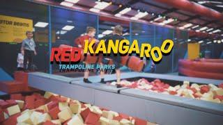 Red Kangaroo Reading