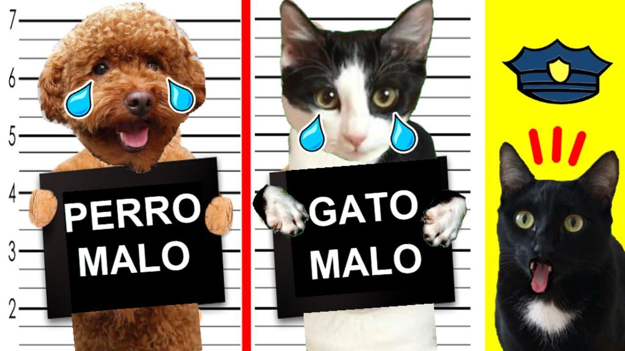 Gato vs policía en casa con gatos graciosos Luna y Estrella y mi perro divertido / Videos de gatitos