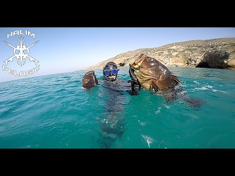 chasse sous marine mérous Oran Algérie/صيد سمك الميرو في وهران الجزائر