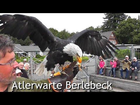 Birds of prey center 'Adlerwarte Berlebeck' [HD]