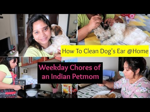 My Daily Chores | What Made Me Irritated | How To Clean Dog Ears At Home