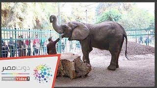 كلنا لينا معاها حكاية.. الفيلة نعيمة