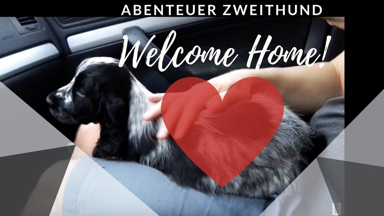 abenteuer zweithund willkommen zu hause hamlet youtube. Black Bedroom Furniture Sets. Home Design Ideas