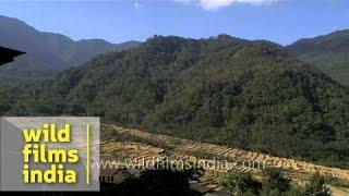 Terrace cultivation in Khonoma village, Nagaland