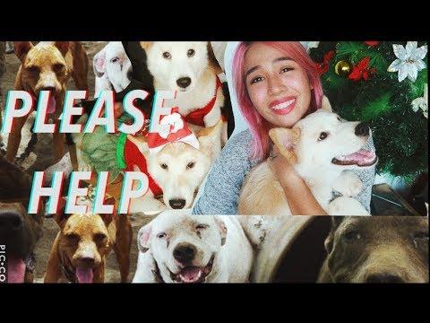IF YOU TRULY LOVE DOGS | Laguna Pitbulls Manila | Jessica Godinez