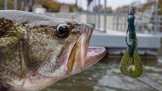 Fall Bass Fishing Using Crawfish Baits