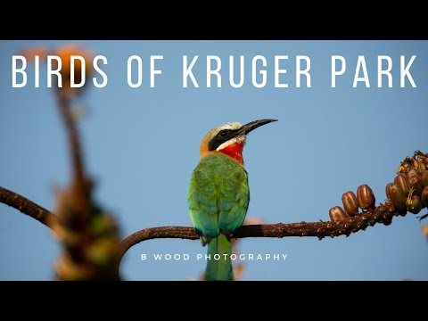 Birds of Kruger National Park, South Africa  HD