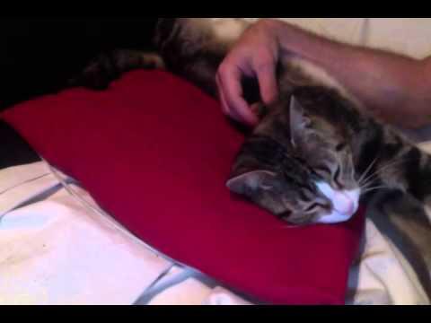 comment faire dormir son chat youtube. Black Bedroom Furniture Sets. Home Design Ideas