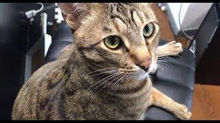猫と相談枠【集まれえええええ】 thumbnail