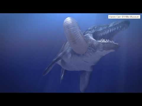 Witte Museum Cretaceous Marine Seas!