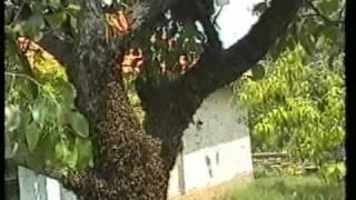 Захващане на рояк за кошер -капан/bee trap /