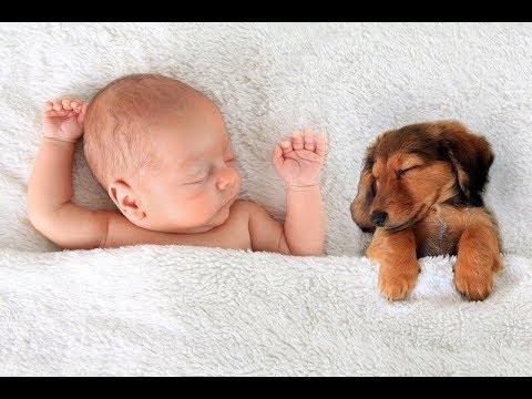 【犬と赤ちゃん】可愛い仲良し動画で癒されてください♬#2