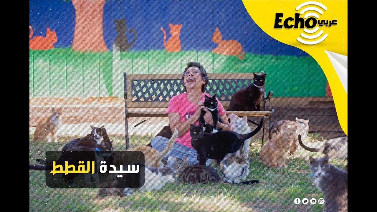 سيدة القطط.. تعرف على قصة المرأة التي تعيش مع 1000 قطة
