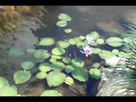 Lago artificial con peces vivero arte y jardin youtube for Vivero para peces