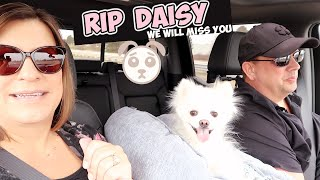 IT'S WORSE THAN WE THOUGHT ~ RIP DAISY 💔
