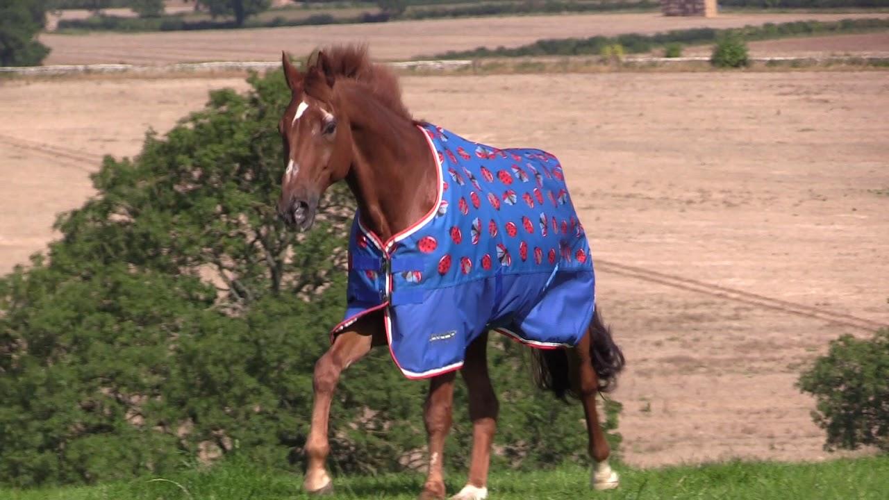 Tempest Original Lite Shires Equestrian